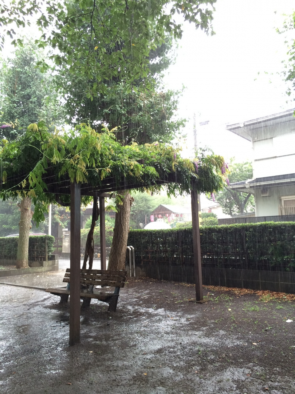 写真 2014-08-09 9 00 01